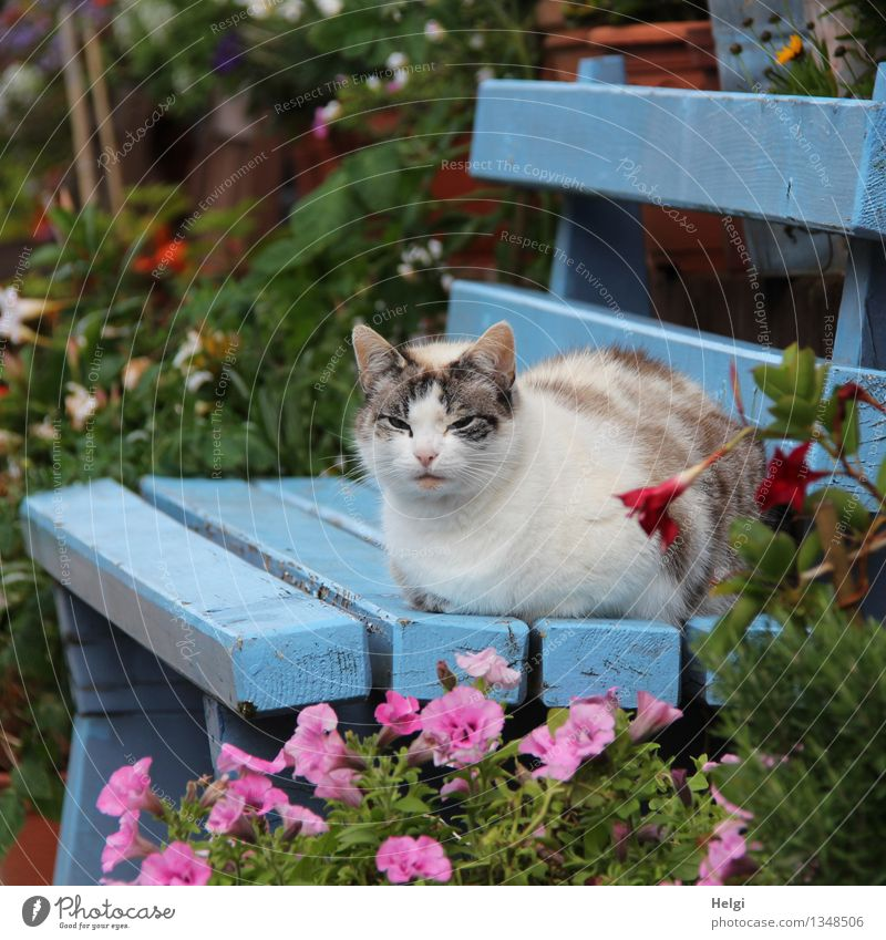 chill out Environment Nature Plant Animal Autumn Beautiful weather Flower Leaf Blossom Garden Pet Cat 1 Bench Wood Blossoming Relaxation Sit Esthetic Uniqueness