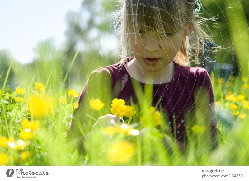 Submerged Child Girl Flower Spring Summer Physics Meadow Grass Healthy Pollen Blossom Animal Insect Tick Dreamily Dive Harmonious Search Find Dandelion Harvest