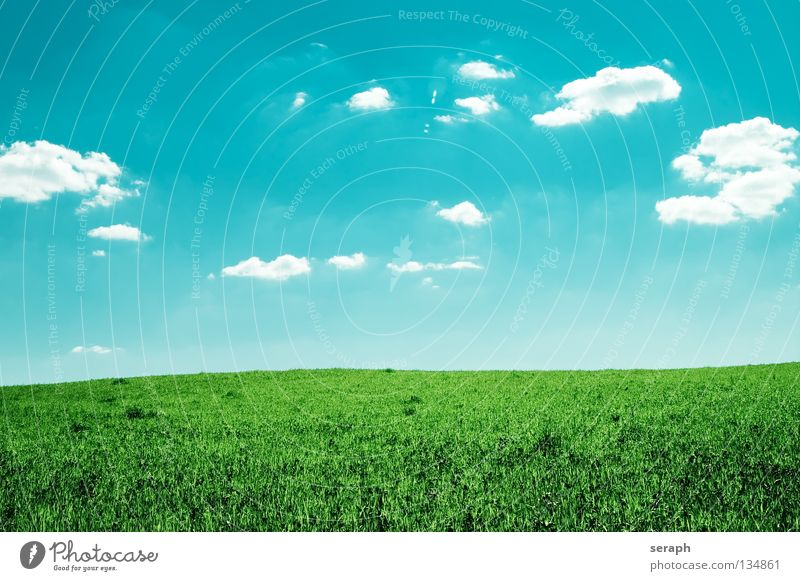Easiness Background picture Meadow Field Sky Clouds Lawn Nature Grass Landscape Flower meadow Freedom Far-off places Agriculture Horizon Minimalistic Natural