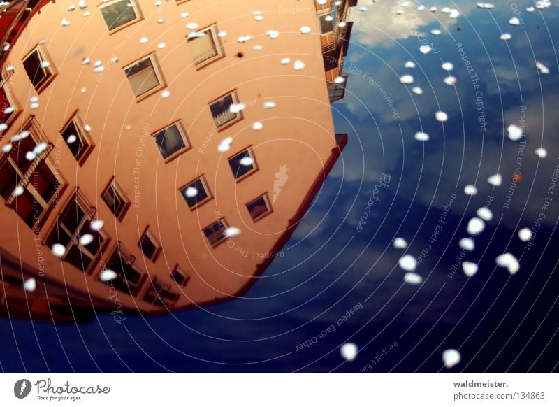 Sky House (Residential Structure) Clouds Blossom Dirty Glittering Dust Blossom leave Car Hood