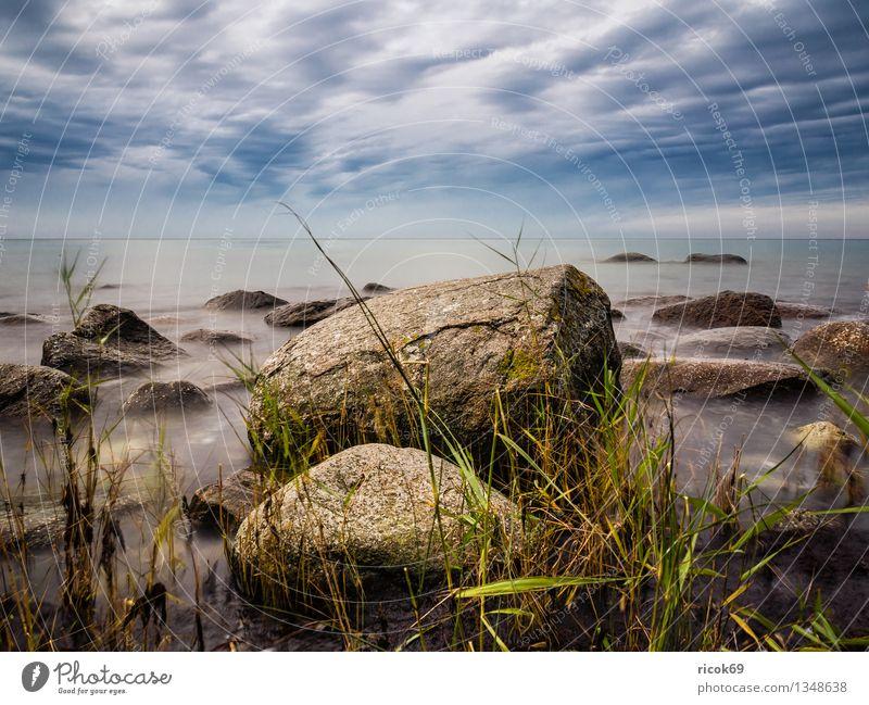 Nature Vacation & Travel Blue Ocean Landscape Calm Coast Stone Rock Idyll Romance Baltic Sea Common Reed Rügen Mecklenburg-Western Pomerania Stony