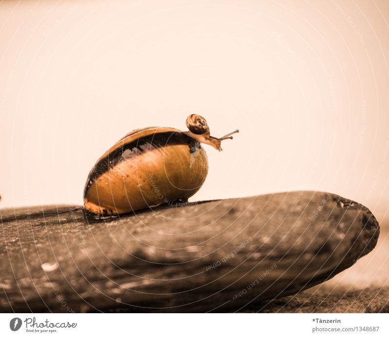 Baby gymnastics II Nature Animal Wild animal Snail 2 Baby animal Animal family Discover Crawl Looking Playing Happiness Curiosity Cute Brown Brave