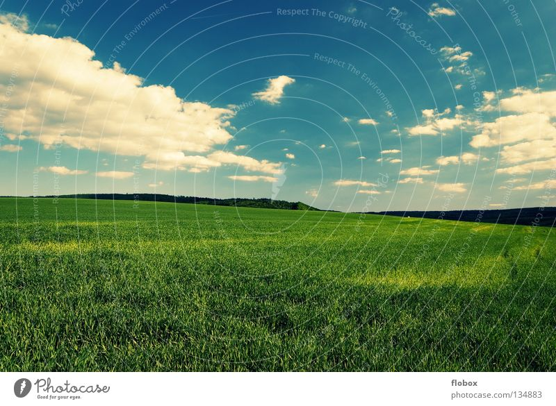 Greenish Field Agriculture Landscape Nature Far-off places Clouds in the sky Cloud field Wisp of cloud Cloud formation Beautiful weather Sky blue White