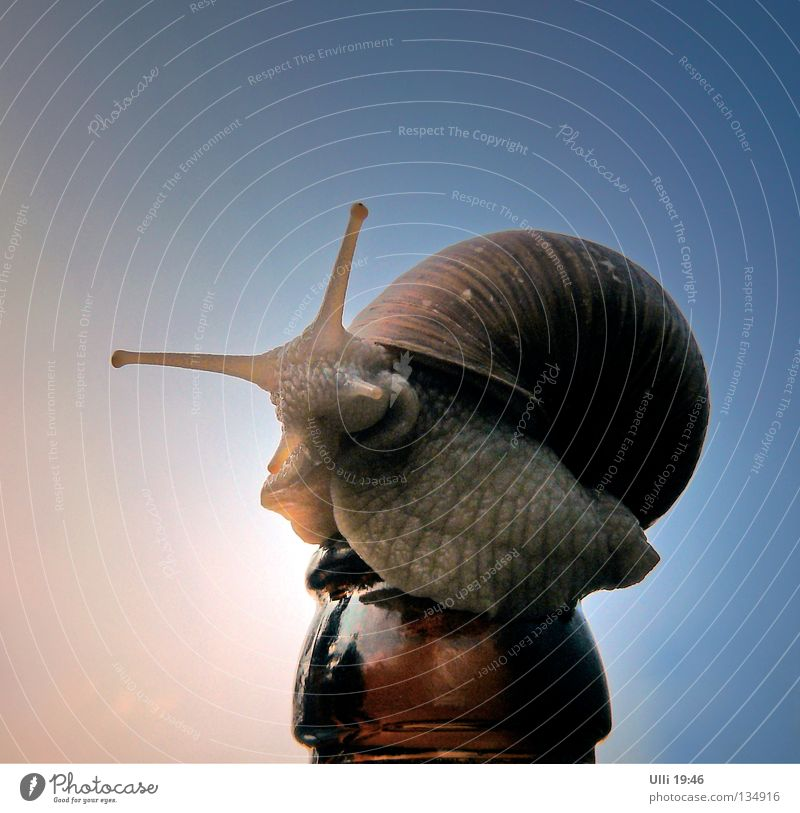 Waiter! More beer! Alcoholic drinks Beer Bottle Animal Sky Beautiful weather Snail 1 Crawl Curiosity Slimy Slow motion Trail of mucus Vineyard snail Snail shell