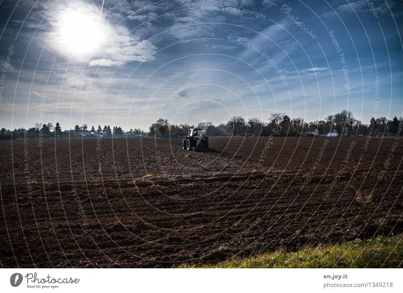 back and forth Healthy Eating Allergy Work and employment Profession Farmer Agriculture Forestry Renewable energy Landscape Earth Sky Sun Sunlight Spring Autumn