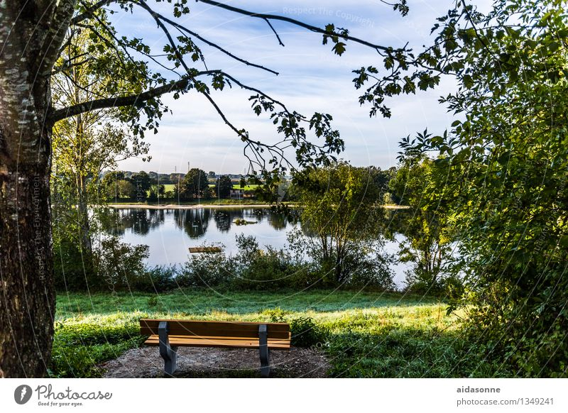 Summer Landscape Forest Moody Contentment Lakeside Bench Serene Bavaria