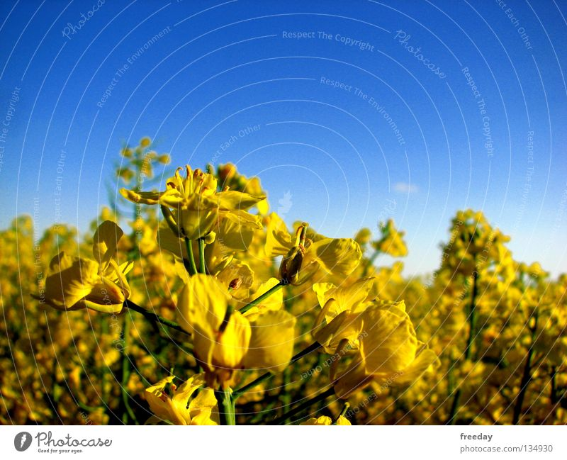 Sky Blue Green Tree Plant Colour Far-off places Yellow Healthy Background picture Tall Force Future Cloth Transience Agriculture