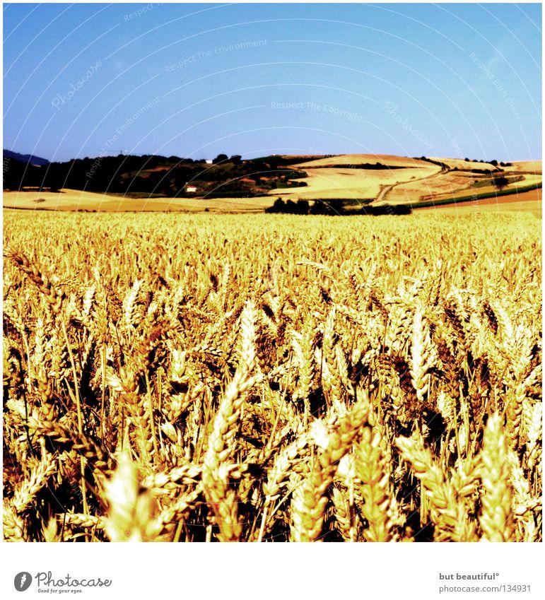 Summer Warmth Power Field Desert Physics Spain Grain Effort Cornfield Wheat Endurance Wheatfield