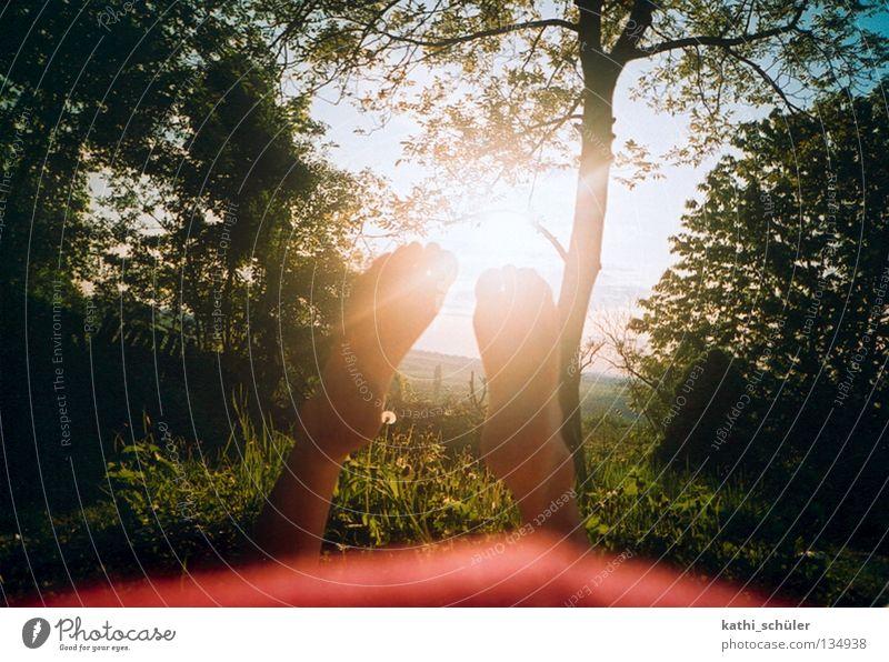 late summer Sun Meadow Hippie Awareness Indian Summer Nature Relaxation Feet Park Green Tree
