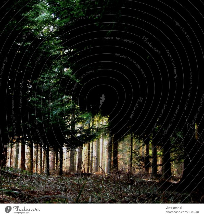 Nature Tree Calm Loneliness Forest Dark Environment Grass Fear Walking Empty Wild animal Perspective Floor covering To go for a walk Creepy