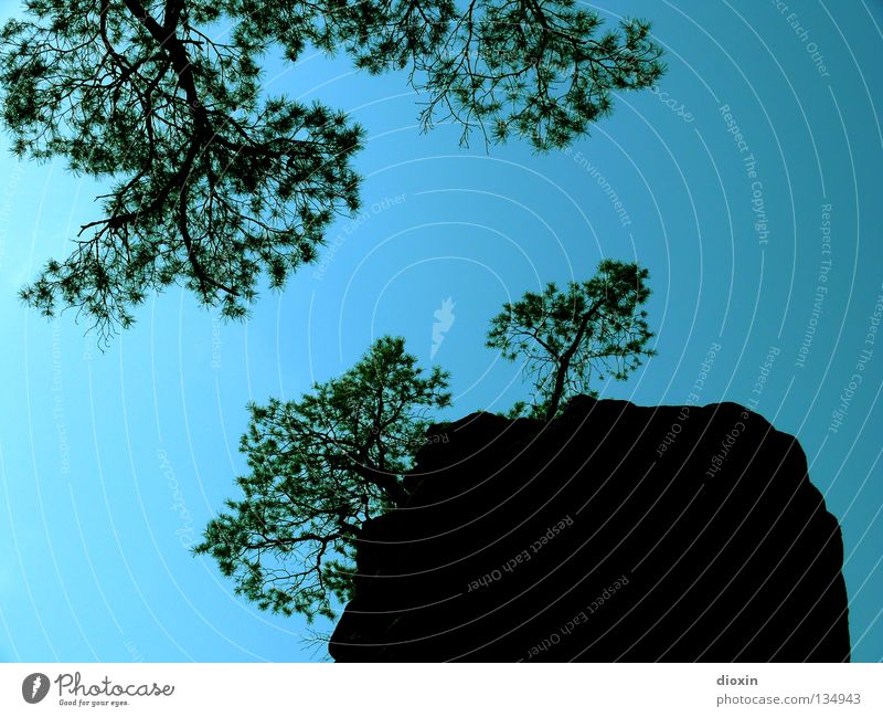Nature Sky Tree Blue Leaf Mountain Hiking Rock Tall Trip Vantage point Bushes To go for a walk Climbing Branch Upward