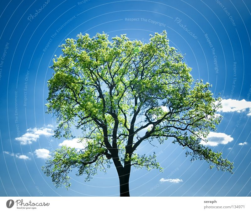 Sky Nature Plant Summer Tree Loneliness Leaf Clouds Freedom Moody Power Idyll Individual Force Branch Tree trunk