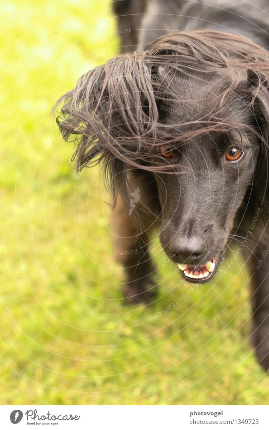 wildling Earth Grass Meadow Animal Pet Dog Animal face Pelt 1 Brash Wild Green Black Joy Life Energy Resolve Colour photo Exterior shot Day