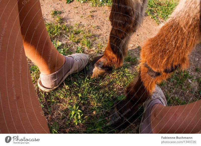 friends Legs Feet 1 Human being Sand Summer Grass Stockings Footwear Brunette Animal Pelt Donkey Odd-toed ungulate Hoof Together Brown Green Orange Pink White
