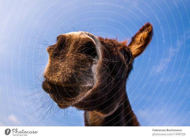 Sky Blue White Animal Eyes Brown Head Observe Soft Pelt Watchfulness Brunette Animal face Neck Smart Muzzle
