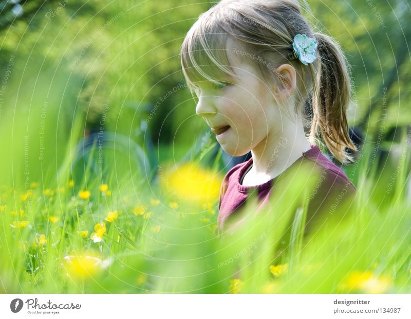 Delicious buttercups! Child Girl Flower Spring Summer Physics Meadow Grass Healthy Pollen Blossom Animal Insect Tick Dreamily Dive Harmonious Search Find