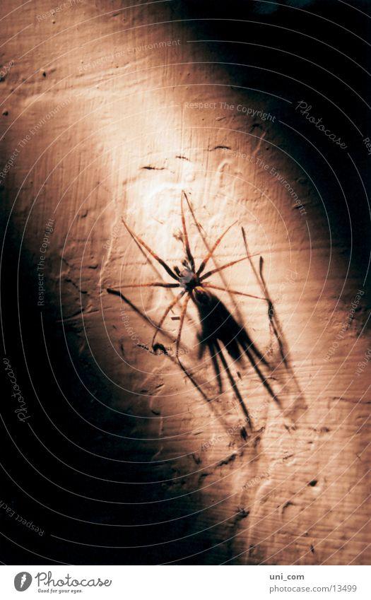 Wall (building) Transport Disgust Spider Crawl Cellar Beam of light