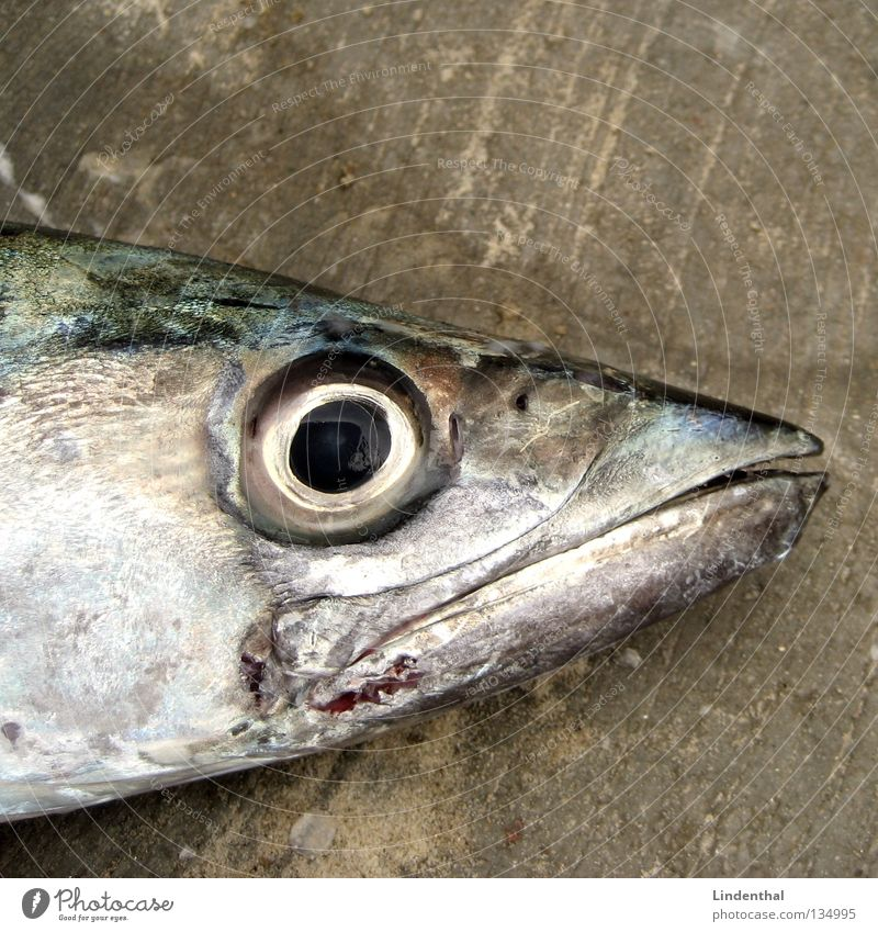 Eyes Death Mouth Fish Smoothness Barn Muzzle