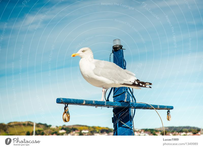 seagull Summer Coast Bay North Sea Baltic Sea Ocean Fishing village Port City Animal Wild animal Bird Seagull 1 Observe Blue Yellow Gray Concentrate Stagnating