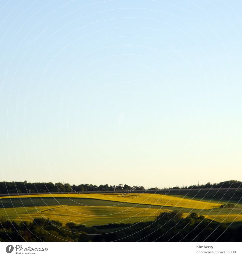 yellow outlook Canola Plant Gasoline Diesel Bio-diesel Field Blossom Yellow Agriculture Hill Forest Tree Nature Twilight Horizon Sky Panorama (View) Summer
