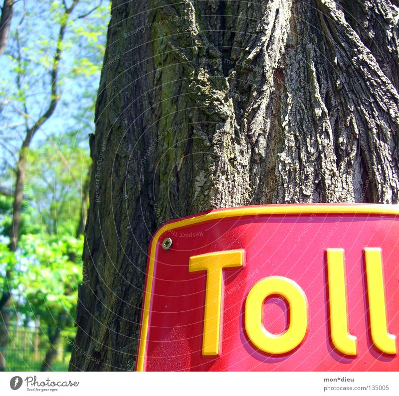 Green Tree Red Joy Leaf Yellow Signs and labeling Signage Tree trunk Screw Tree bark Great Figure of speech Tin plate sign