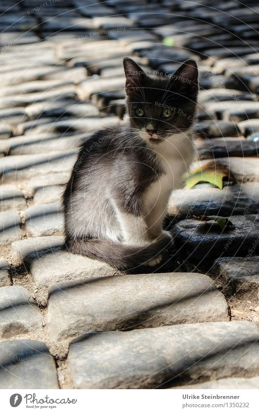 Little Princess of Bosporus Istanbul Turkey Town Old town Places Street Animal Pet Cat 1 Baby animal Observe Looking Sit Wait Cuddly Curiosity Cute