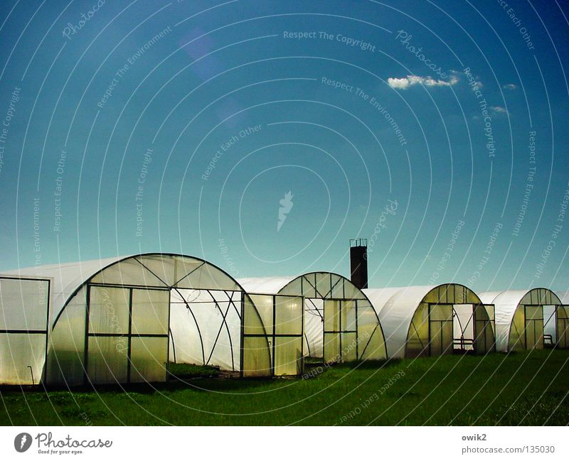plastic bunkers Vegetable Fruit Summer Agriculture Forestry Nature Plant Earth Air Clouds Climate change Beautiful weather Manmade structures Chimney Plastic