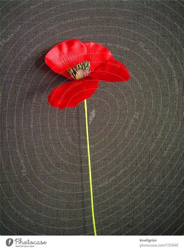 Flower Green Plant Red Gray Decoration Stalk Poppy Placed Corn poppy Silk flower