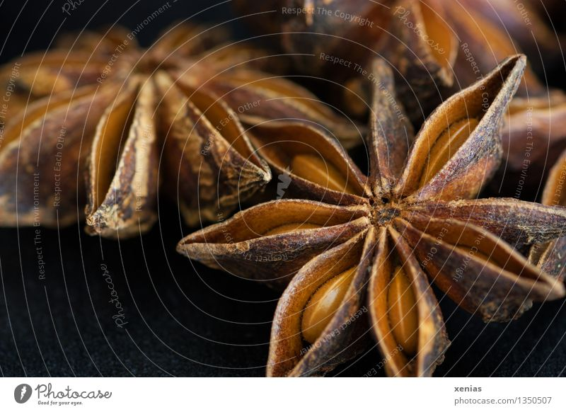 Macro shot of star anise Star aniseed Herbs and spices Asian Food Fragrance Brown Black illicium verum Christmas & Advent essential oil pissed Dark background