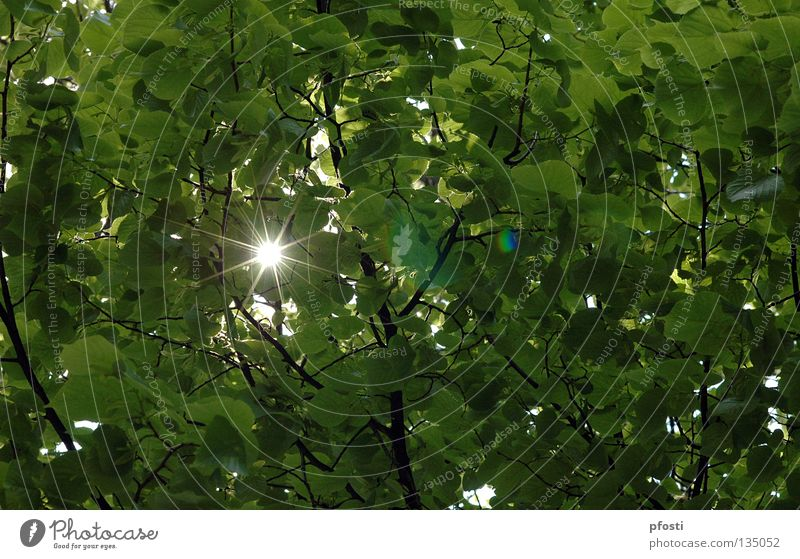 Nature Beautiful Tree Sun Green Summer Leaf Warmth Bright Lighting Glittering Happiness Physics Branch Radiation Easy