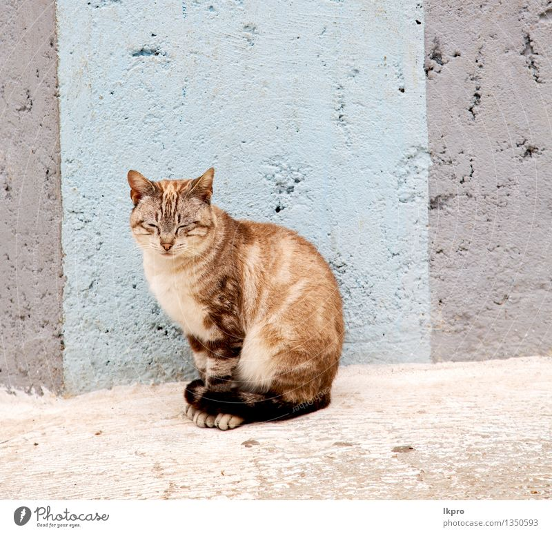 morocco and house background Cat Nature Man Beautiful Summer White Relaxation Red Loneliness Animal House (Residential Structure) Face Adults Street Small Gray