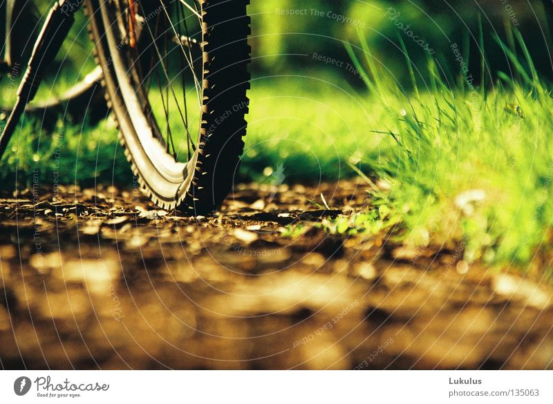 summer Grass Green Brown Wheel rim Evening sun Vacation & Travel Relaxation Flat (apartment) Society Garden Park Bicycle Spokes Lanes & trails
