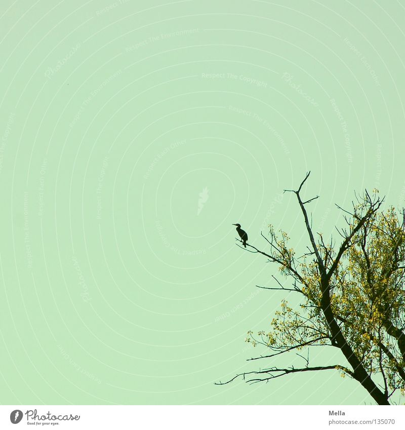 Nature Sky Tree Blue Leaf Spring Freedom Bird Wait Environment Search Sit Protection Observe Branch