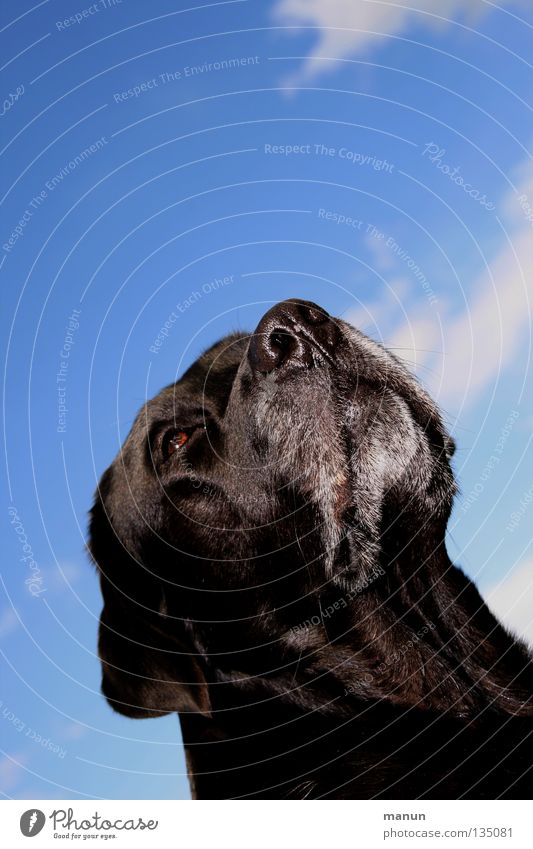 Sky Dog Beautiful Summer Animal Clouds Black Calm Power Cute Soft Trust Serene Noble Mammal Wisdom