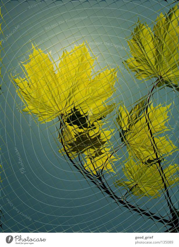 Tree Summer Leaf Autumn Spring Fear Glass Branch Tile Window pane Panic Twig Maple tree