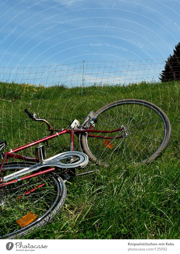 Re-roller on the meadow Bicycle Meadow Fence Ruminant Summer Spring Grass Vacation & Travel Relaxation Pedal Green Transport Lie Trip Coil Fenced in ringing