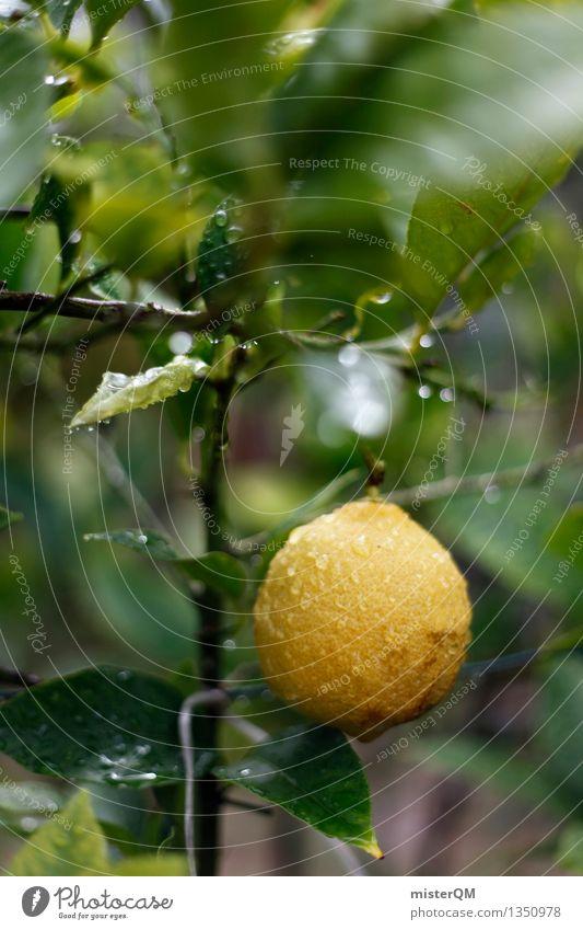 lemon-fresh. Art Work of art Esthetic Lemon Lemon tree Lemon juice Lemon yellow Lemon leaf Lemon peel Fresh Yellow Colour photo Subdued colour Exterior shot