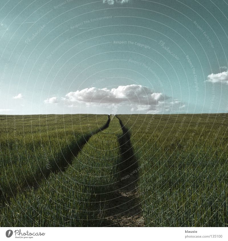 under the clouds Field Blade of grass Clouds Horizon Summer Physics Earth Warmth To go for a walk Shadow Blue Agriculture Tractor track