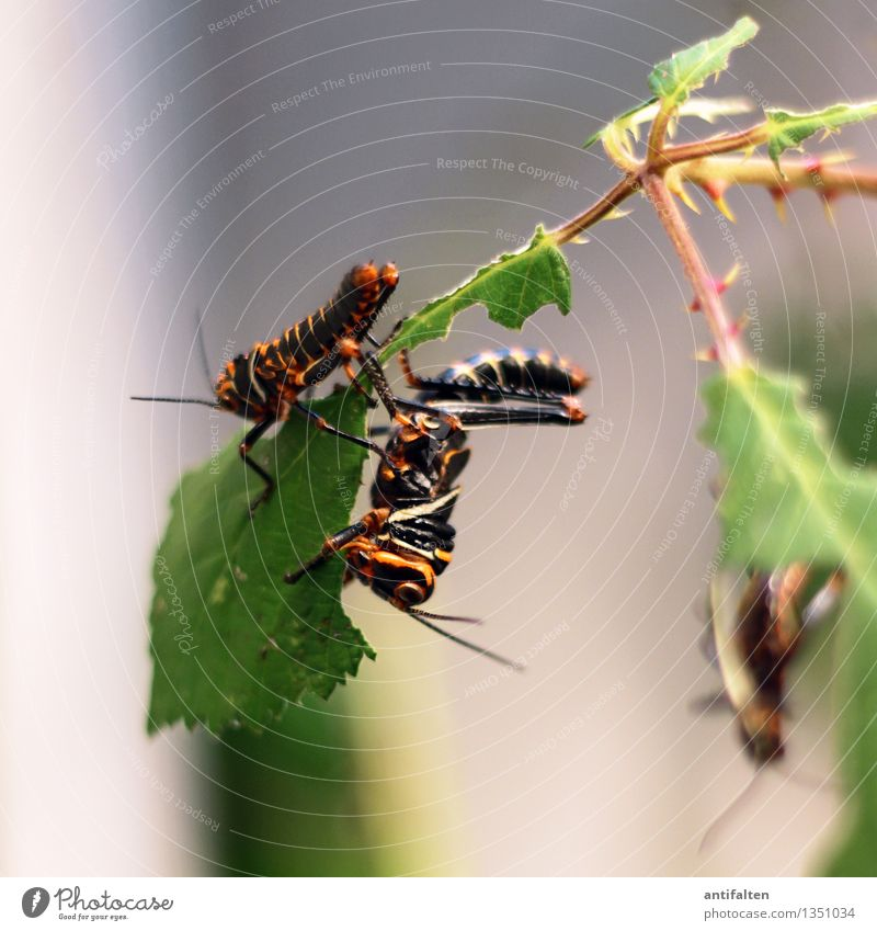 The locusts Environment Nature Plant Tree Bushes Leaf Thorn Garden Park Animal Animal face Wing Zoo Aquarium Locust Insect Feeler Legs 2 3 Group of animals