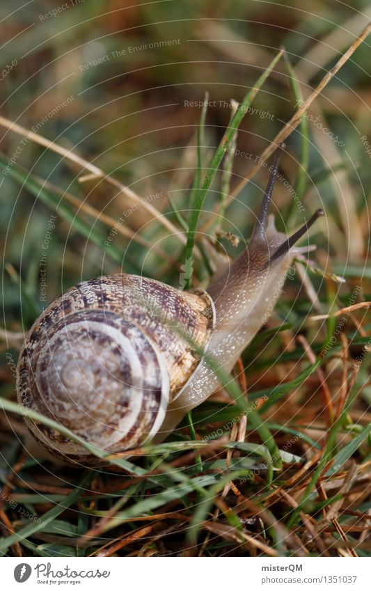 Speed buzz. Art Work of art Esthetic Snail Snail shell Snail slime Slowly Speed rush Nature Woodground Crawl Colour photo Subdued colour Detail Experimental