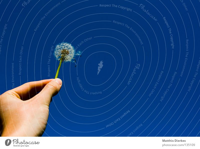 Sky Blue Hand Plant Flower Joy Life Freedom Blossom Air Wind Fingers To hold on Infinity Delicate Stalk