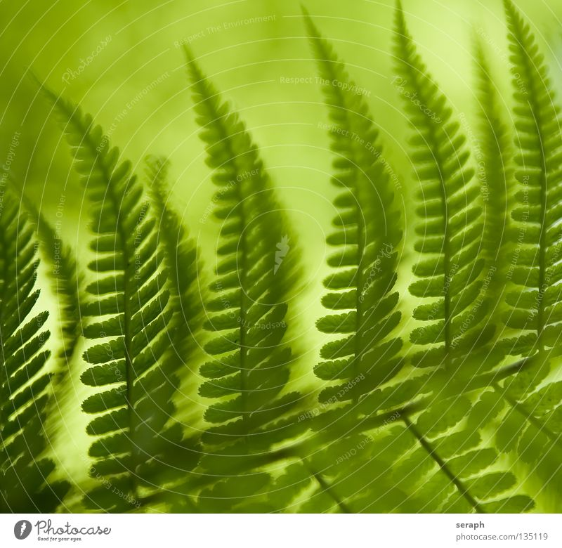 Blurry Fern Green Dark Rachis Pteridopsida Plant Environment Delicate Damp Soft Plumed Fresh Growth Environmental protection Botany Biology Maturing time