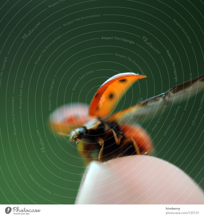 Nature Green Summer Animal Freedom Small Going Flying Fingers Insect Zoo Beetle Ladybird Departure May Bow