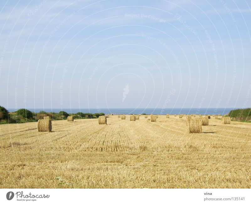 golden expanse Bale of straw Calm Ocean Wheatfield Autumn Coast Normandie Field Summer Drought Work and employment France Far-off places Harvest
