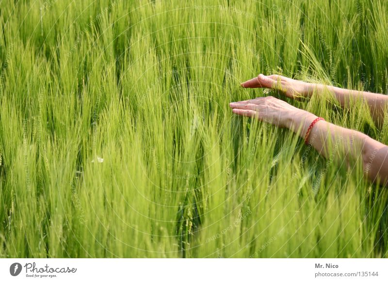 Human being Woman Nature Green Summer Hand Emotions Healthy 2 Field Energy industry Power Fingers Soft Stripe Touch