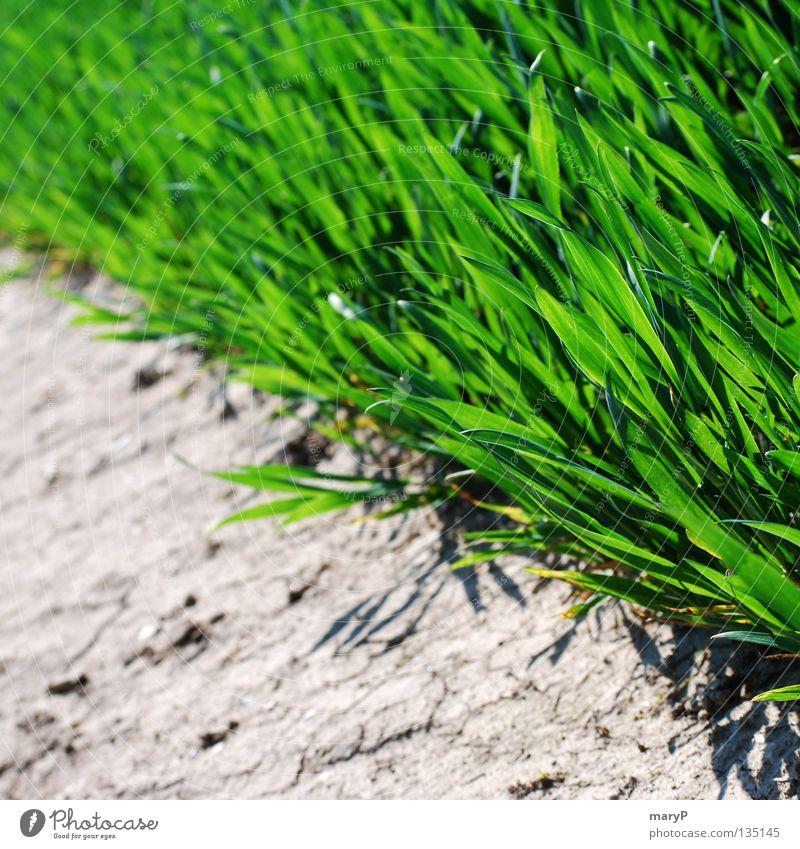 Green Summer Life Relaxation Grass Stone Field Fresh