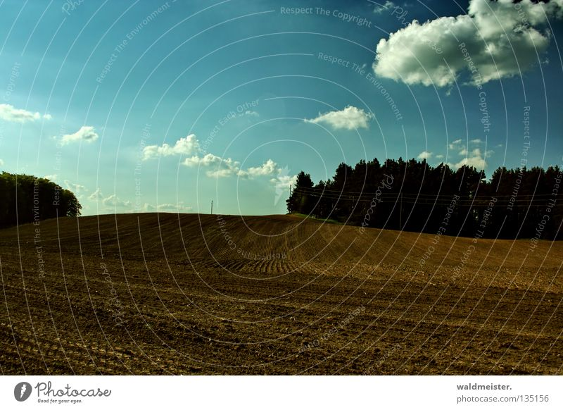 Field in spring Mecklenburg-Western Pomerania Arable land Brown Tree Forest Clouds Spring Autumn Plow Tractor track Landscape Earth Floor covering Sky