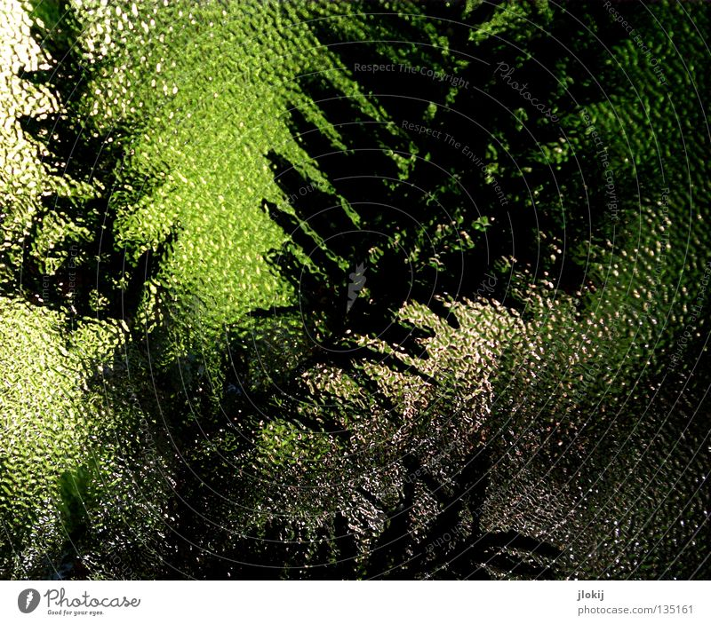 The window to the courtyard Window Tree Fir tree Coniferous trees Blur The Needles Plant Nature Dark Detail Beautiful Twig Branch Yew grisly Bright Shadow