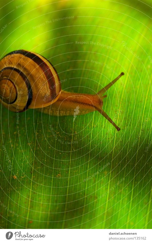 mobile home 2 Spring Green Pea green House (Residential Structure) Snail shell Crawl Slowly Background picture Spiral Mobility Leaf Macro (Extreme close-up)