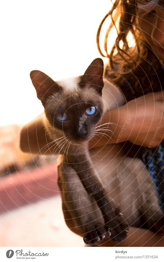 and your blue eyes..... Feminine Child 1 Human being 3 - 8 years Infancy 8 - 13 years Brunette Long-haired Pet Cat Animal Observe To hold on Hang Looking